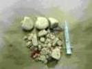 Močové kameny u feny jezevčíka